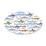School of Sharks 1 Oval Car Magnet