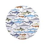 School of Sharks 1 3.5