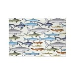 School of Sharks 1 Rectangle Magnet (10 pack)