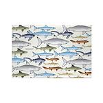 School of Sharks 1 Rectangle Magnet