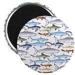 School of Sharks 1 Magnet