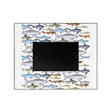 School of Sharks 1 Picture Frame
