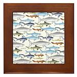 School of Sharks 1 Framed Tile