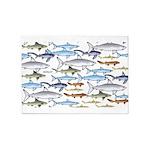 School of Sharks 1 5'x7'Area Rug