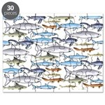 School of Sharks 1 Puzzle