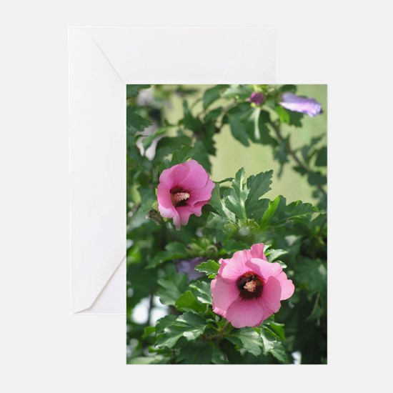 Rose of Sharon Greeting Cards (Pk of 10)