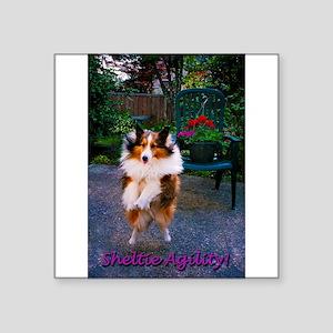 "Sheltie Agility Square Sticker 3"" x 3"""