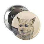 Norwich Terrier 2.25