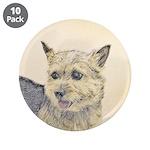 Norwich Terrier 3.5