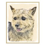 Norwich Terrier Small Poster