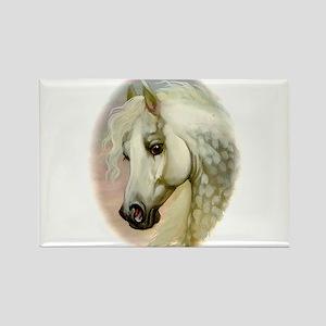 Dapple Grey Arabian Horse Rectangle Magnet