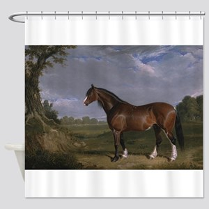 Vintage Painting of Clydesdale Stallion Shower Cur