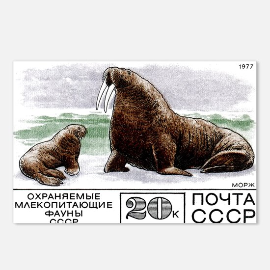 1977 Russia Walrus With Calf Postage Stamp Postcar
