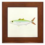 Scad Jack (Green Jack) fish Framed Tile