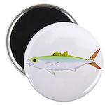 Scad Jack (Green Jack) fish Magnet