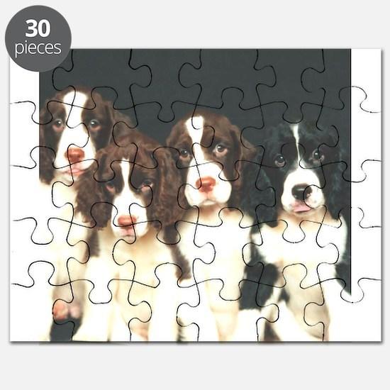 springer pups sq.png Puzzle