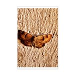 Moth on a Wall Mini Poster Print