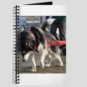 Alaskan Malamute Power Journal