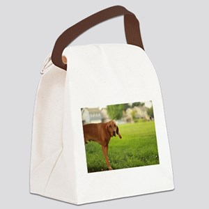 Viszla dog at park in san Jose Canvas Lunch Bag