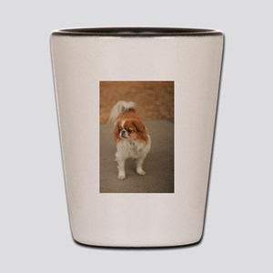 Japanese chin on path at park in san Jo Shot Glass