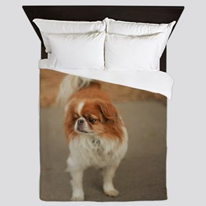 Japanese chin on path at park in san J Queen Duvet