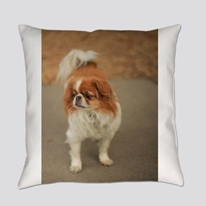 Japanese chin on path at park in s Everyday Pillow
