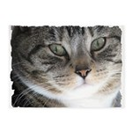 Cat Close-up 5'x7'Area Rug