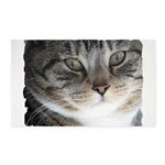 Cat Close-up 3'x5' Area Rug