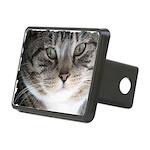 Cat Close-up Rectangular Hitch Cover