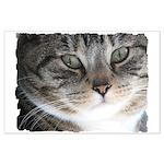 Cat Close-up Large Poster