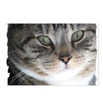 Cat Close-up Postcards (Package of 8)