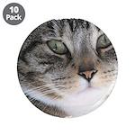 Cat Close-up 3.5