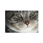 Cat Close-up Rectangle Magnet (100 pack)