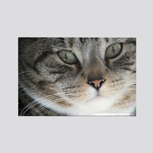 Cat Close-up Rectangle Magnet