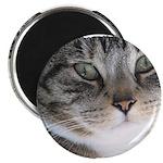 Cat Close-up Magnet