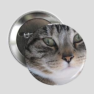 "Cat Close-up 2.25"" Button"