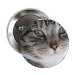 Cat Close-up 2.25