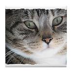 Cat Close-up Tile Coaster