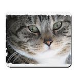 Cat Close-up Mousepad