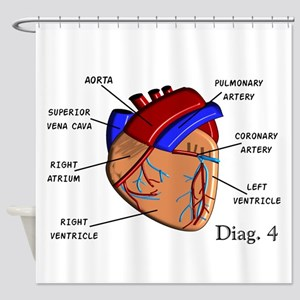 The heart Diagram BEST Shirts Shower Curtain