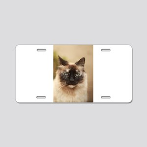 Colorpoint cat up close Aluminum License Plate