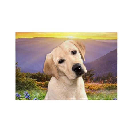 Labrador Meadow Rectangle Magnet (10 pack)