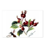 Rose Rosehips and Bee Postcards (Package of 8)