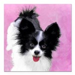 Papillon (White and Blac Square Car Magnet 3