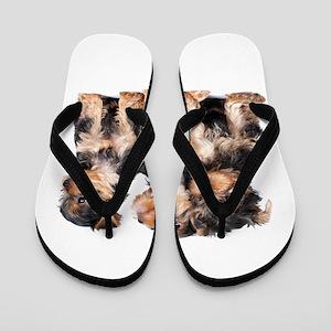 Yorkie Puppies Flip Flops