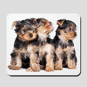 Yorkie Puppies Mousepad