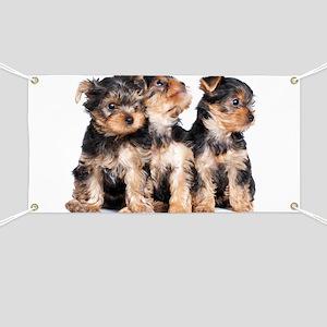 Yorkie Puppies Banner
