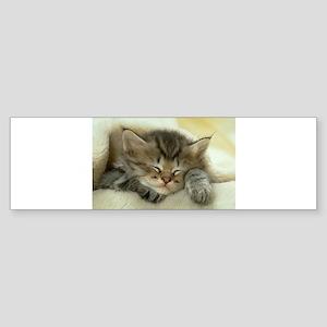 sleeping kitty Sticker (Bumper)