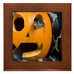 Black Snake in Pumpkin Framed Tile