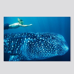 Whale shark and snorkeler - Postcards
